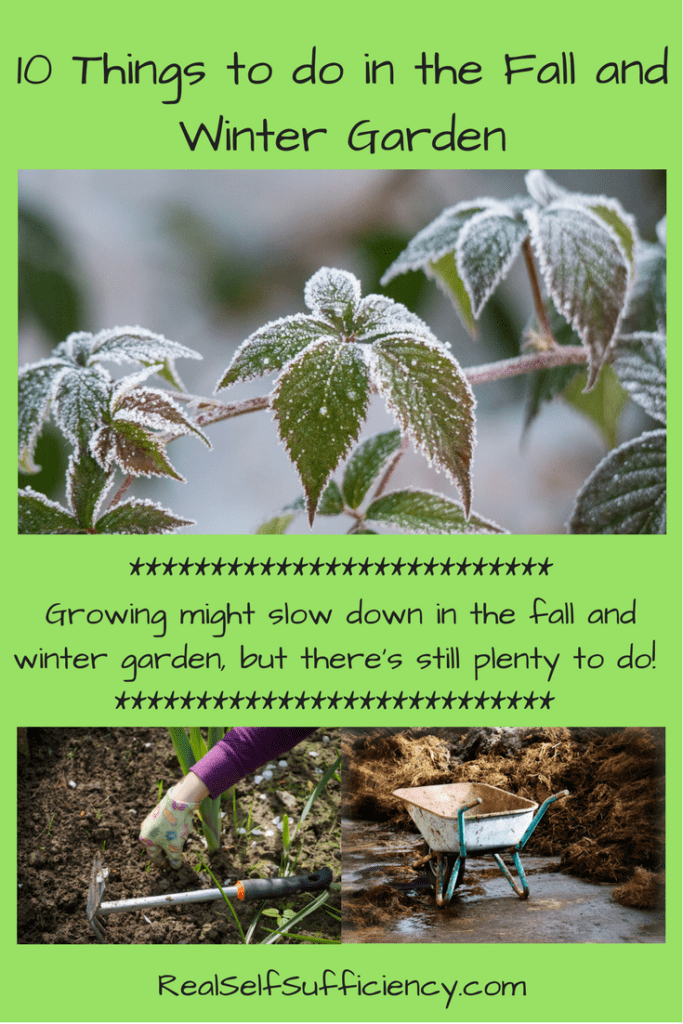 10 Things To Do In The Garden In Fall And Winter Real Self Sufficiency