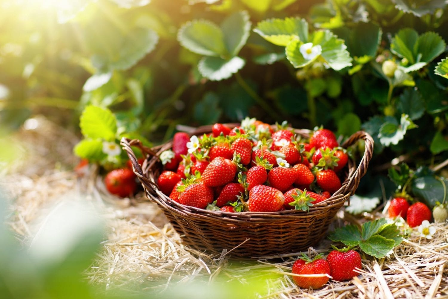 Foraging For Beginners: Why Bother Foraging?