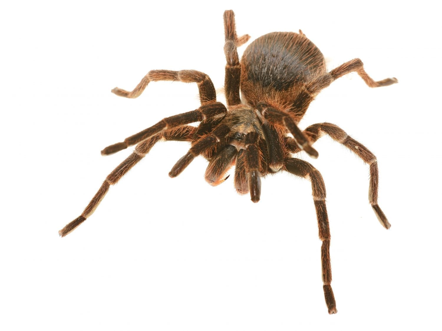 7 Natural Ways to Keep Spiders Out of Your Home
