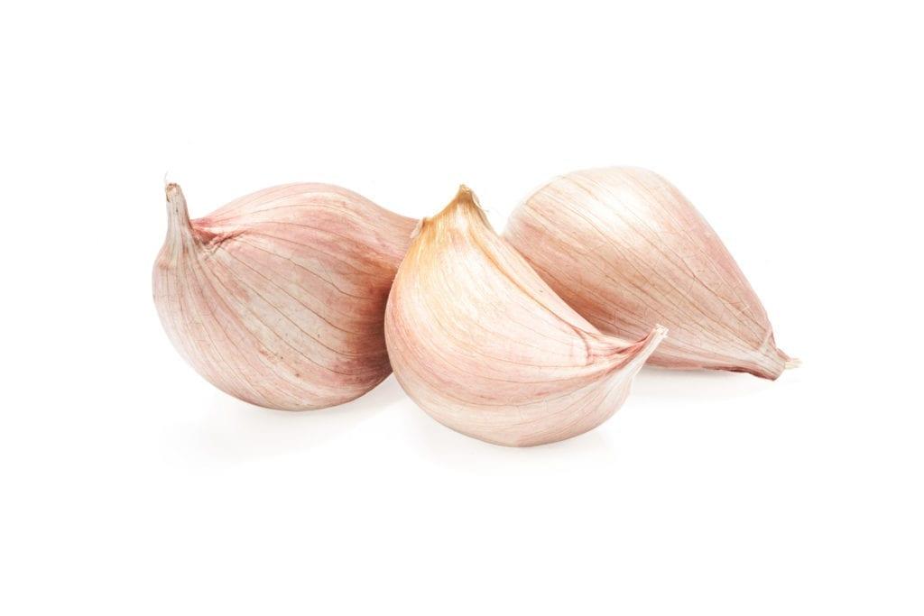 garlic as an antibiotic