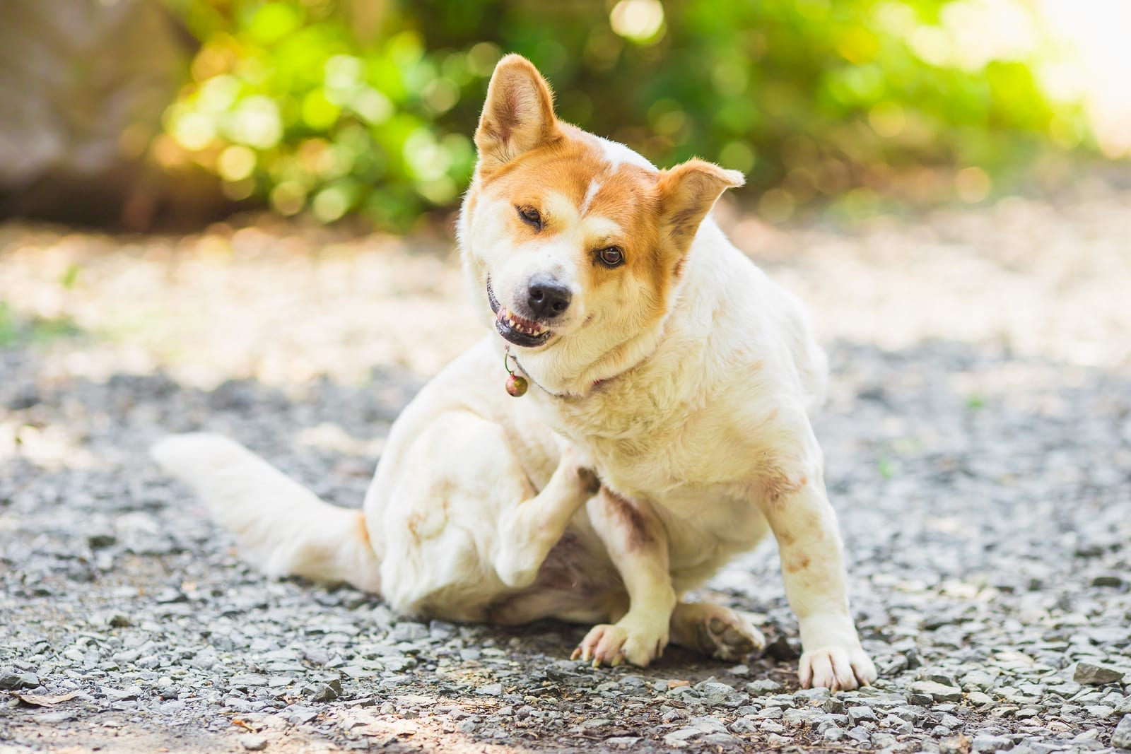Does Your Dog Itch? Find Out How to Soothe Your Dog's Itchy Skin Naturally