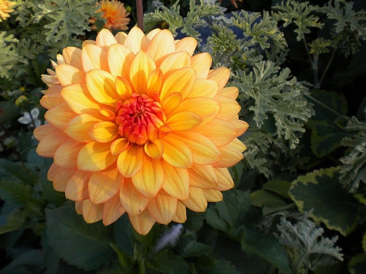 best flowers and herbs to plant with vegetables