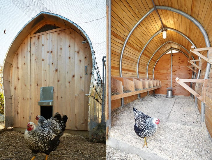 20 Tips For Caring For Chickens In Winter Real Self