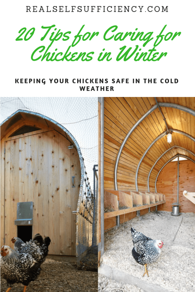 caring for chickens in winter