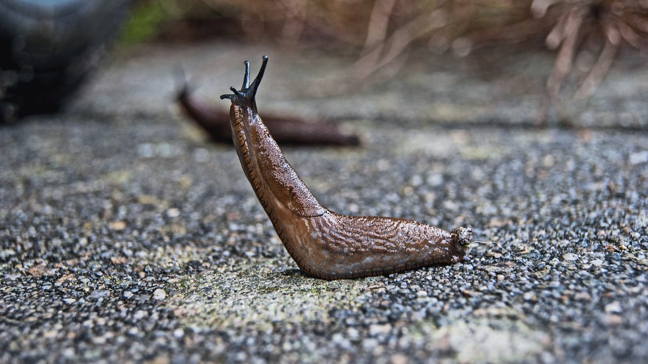10 Fascinating Facts About Slugs