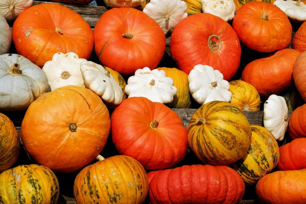 save pumpkin seed, seed saving