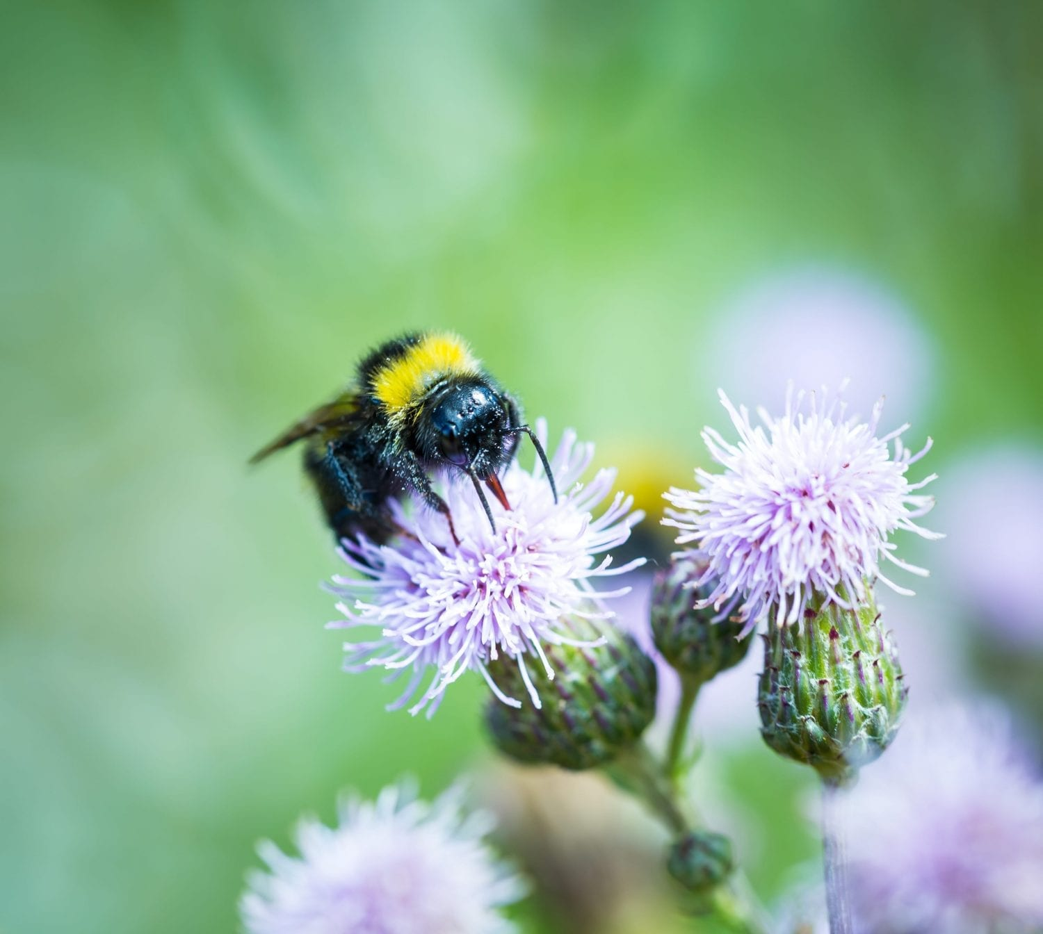 10 Ways to Help Save the Bees (and Why it's So Important)