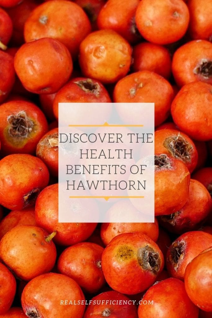 health benefits of hawthorn