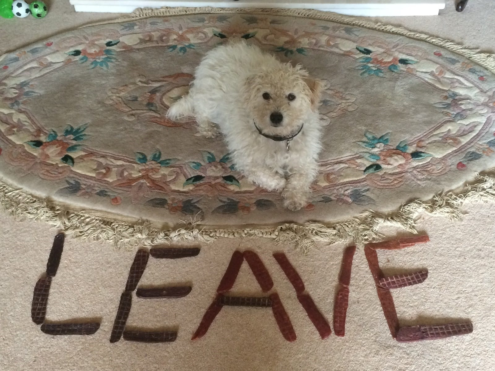 Teaching Your Dog To Leave