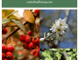 Discover The health benefits of hawthorn berries, flowers, leaves, and Bark
