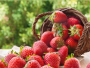 Growing Strawberries Guide
