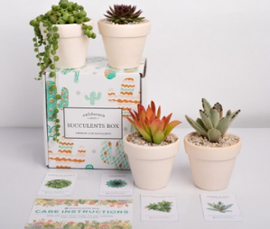 Succulents Box subscription box for plant lovers