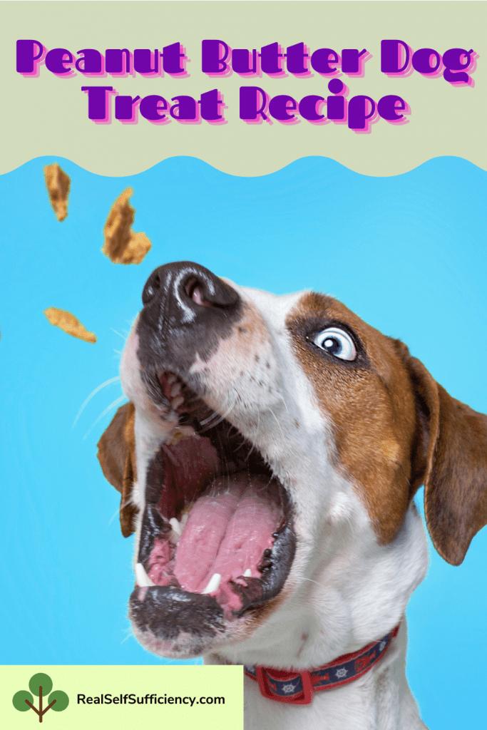 Natural Dog Treat Recipes Pumpkin And Peanut Butter Treats